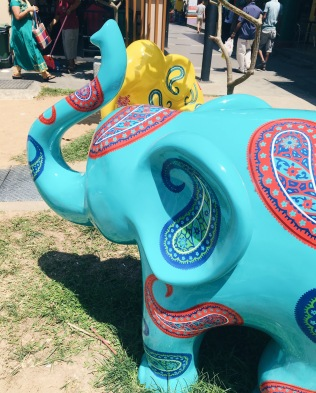 Fun elephants